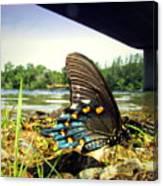 Beautiful Butterfly At The River II Canvas Print