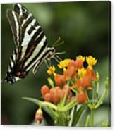 Beautiful Butterfly Waving Canvas Print