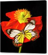 Beautiful Butterfly On Poppy Canvas Print