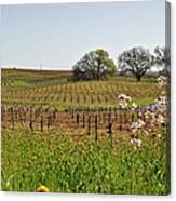 Beautiful California Vineyard Framed With Flowers Canvas Print