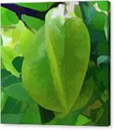 Beautiful Carambola Fruit Tree Canvas Print