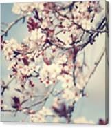 Beautiful Cherry Tree Blossom Canvas Print