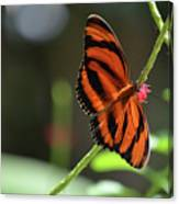 Beautiful Color Patterns To An Oak Tiger Butterfly  Canvas Print