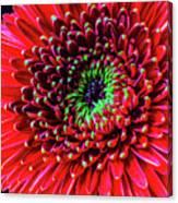 Beautiful Details Of Gerbera Daisy Canvas Print