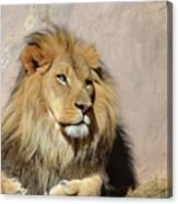 Beautiful Face Of A Lion In The Warm Sunshine Canvas Print