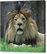 Beautiful Face Of A Male Lion With A Thick Fur Mane Canvas Print