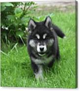 Beautiful Face Of An Alusky Puppy Dog In Thick Green Grass Canvas Print