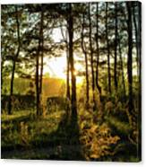 Beautiful Forest At Sunrise Canvas Print