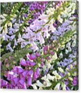 Beautiful Foxglove Canvas Print