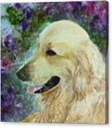 Beautiful Golden Canvas Print