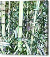 Beautiful Green Leaf Bamboo Canvas Print