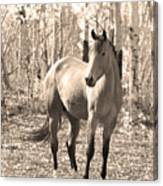 Beautiful Horse In Sepia Canvas Print