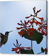 Beautiful Hummingbird Canvas Print
