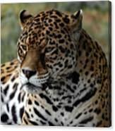 Beautiful Jaguar Portrait Canvas Print