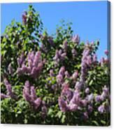 Beautiful Lilacs Day Canvas Print