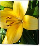 Beautiful Lily I Canvas Print
