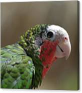 Beautiful Look At At The Profile Of A Conure Parrot Canvas Print