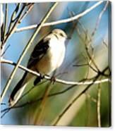Beautiful Mockingbird Canvas Print