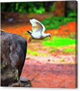 Beautiful Moment With A Bird Take Off , Wall Frame, Art Canvas Print