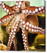 Beautiful Octopus Canvas Print