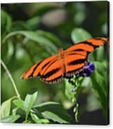 Beautiful Orange Oak Tiger Butterfly In Nature Canvas Print