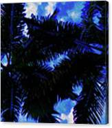 Beautiful Palm In Blue Sky Canvas Print