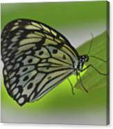 Beautiful Paper Kite Butterfly On A Green Leaf Canvas Print