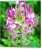 Beautiful pink purple spike flower photograph by kathy m krause beautiful pink purple spike flower canvas print mightylinksfo