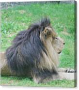 Beautiful Profile Of A Resting Lion In Green Grass Canvas Print