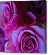 Beautiful Purple Roses 2 Canvas Print