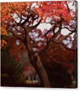 Beautiful Red Japanese Maple Tree In A Garden Canvas Print