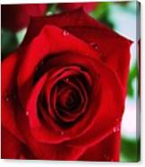 Beautiful Red Rose Abstract 3 Canvas Print