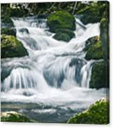 Beautiful River In Forest Canvas Print