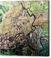 Beautiful Japanese Garden,butchart Gardens,victoria,canada 3. Canvas Print