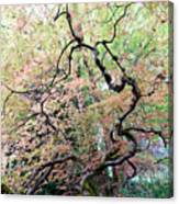 Beautiful Japanese Garden,butchart Gardens,victoria,canada 1. Canvas Print