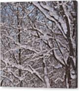 Beautiful Snow Canvas Print