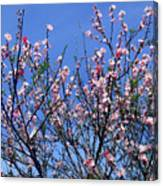 Beautiful Spring. Blooming Tree 1 Canvas Print