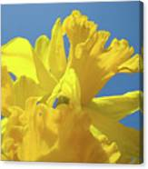 Beautiful Spring Daffodil Bouquet Flowers Blue Sky Art Prints Baslee Troutman Canvas Print