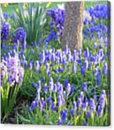 Beautiful Spring Day Canvas Print