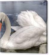 Beautiful Swans Canvas Print