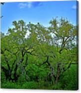 Beautiful Texas View 2 Canvas Print