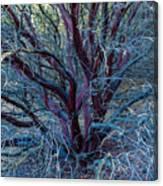 Beautiful Tree Canvas Print