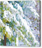 Beautiful Trees Covered With Snow In Winter Park Canvas Print