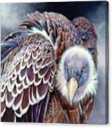 Beautiful Vulture Canvas Print
