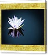 Beautiful Waterlilies Canvas Print