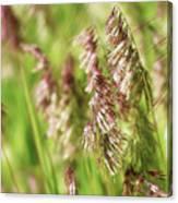 Beautiful Weeds Canvas Print