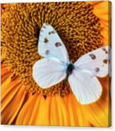 Beautiful White Butterfly On Sunflower Canvas Print