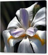 Beautiful White Day Lily Canvas Print