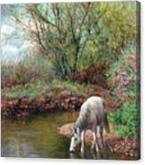 Beautiful White Horse And Enchanting Spring Canvas Print