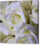 Beautiful White Roses Canvas Print